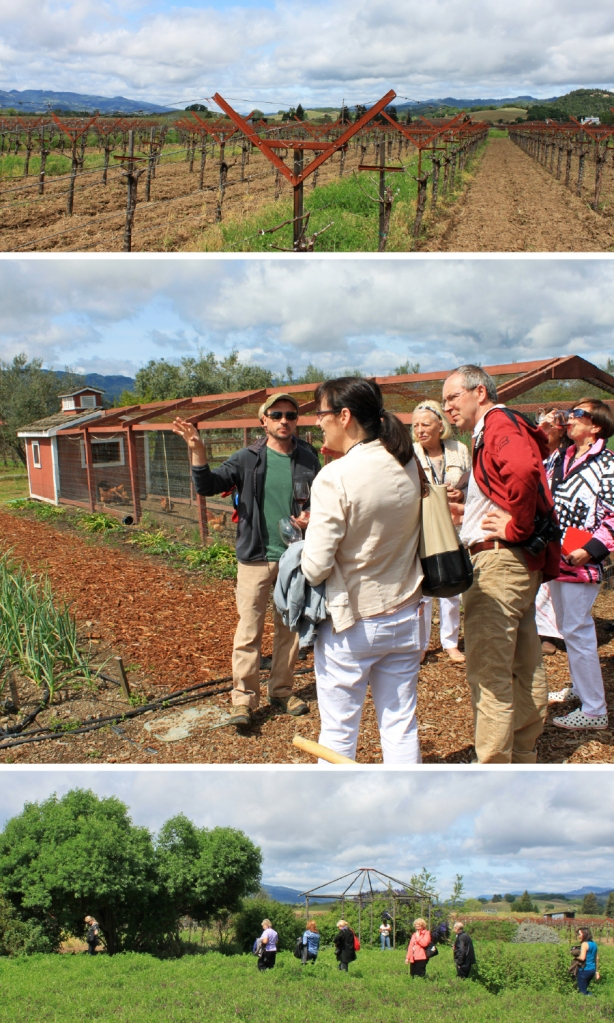 Frog's Leap Head Gardener Degge Hayes leads our group on a tour of the vineyards and winery garden