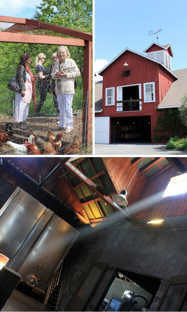 Left: visiting the chicken coop, Right: Frog's Leap's home in renovated 1884 Adamson Winery, Bottom: inside the barrel room